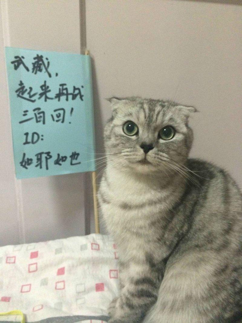 《信喵之野望》微博晒猫大赛优秀作品集