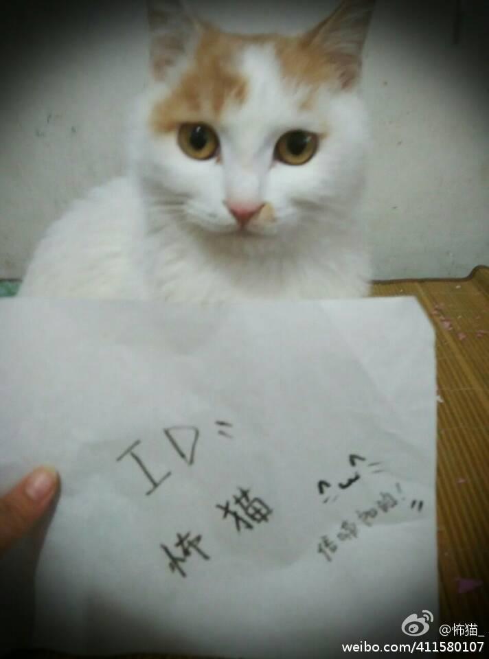 信喵微博晒猫活动获奖作品